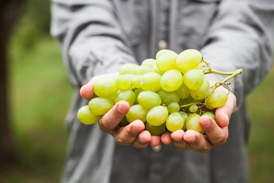 Per la tua tavola, scegli un vino di qualità. Scopri di più