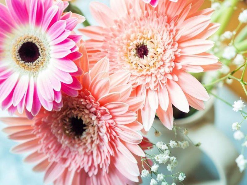 Vendita fiori online: a chi rivolgersi