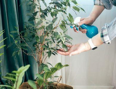 Come far crescere piante da interno con poca luce