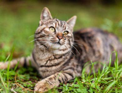 Ipertiroidismo gatto: a quale clinica rivolgersi?